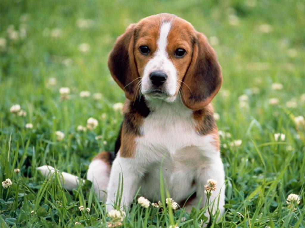 Comment choisir le nom de chien 2016